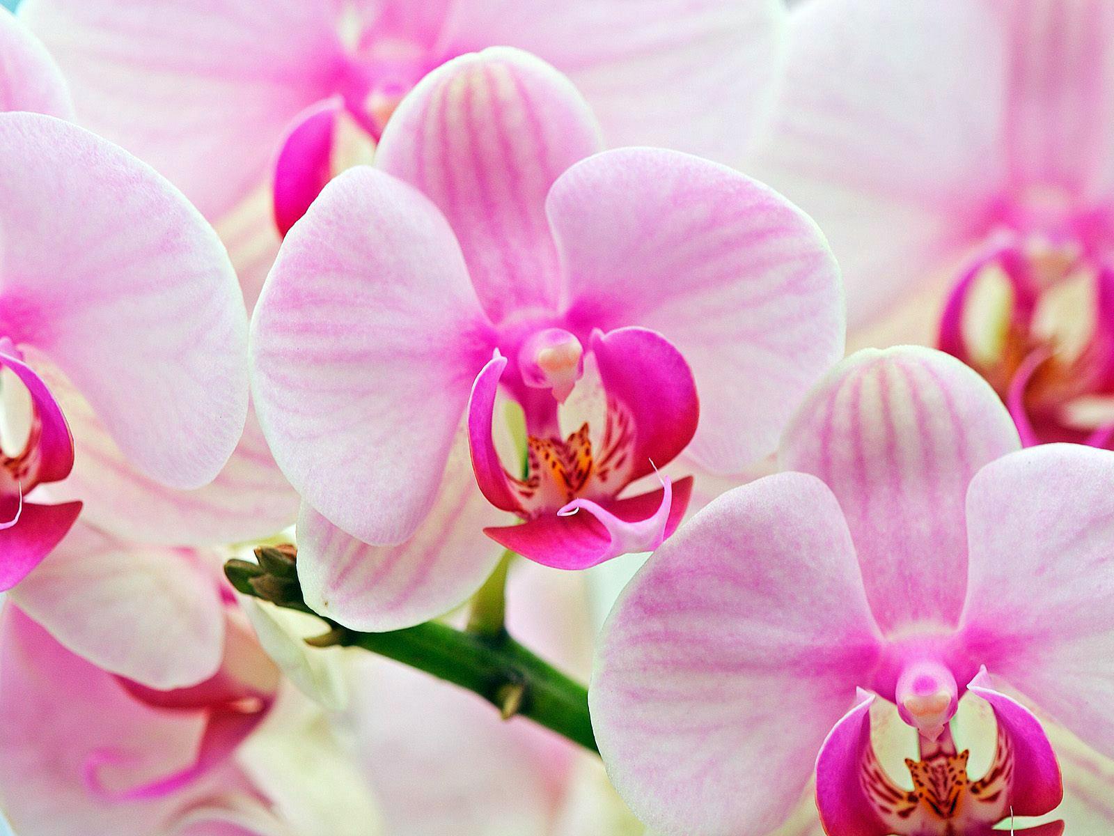 http://zelgan.ucoz.ru/Walpappers/flowers/orchids-1600.jpg