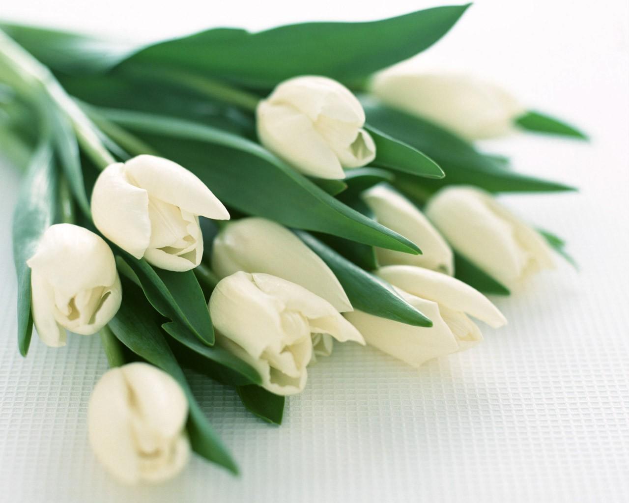Описание цветы обои